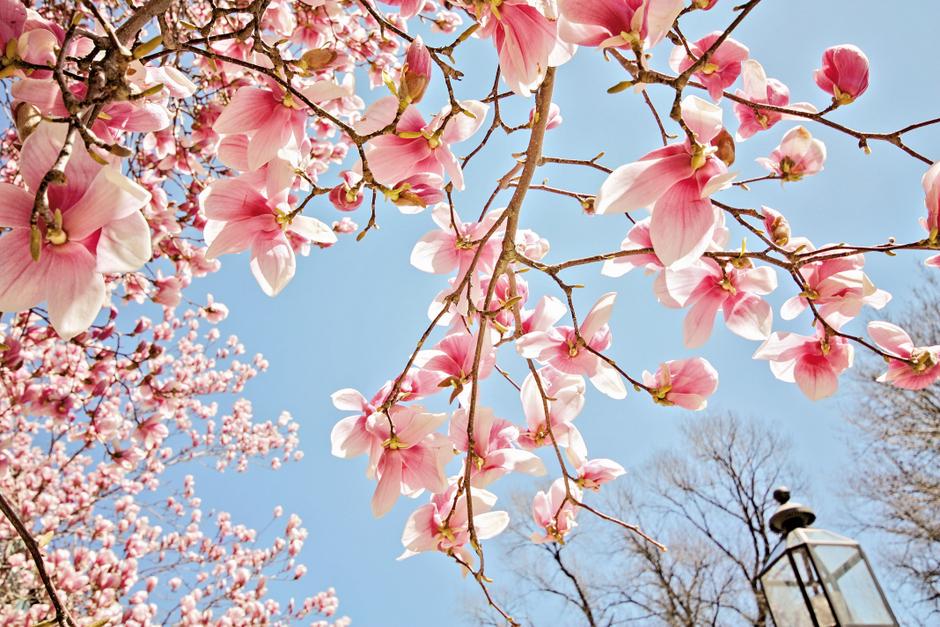 Primavera en Boston