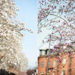 Boston en abril